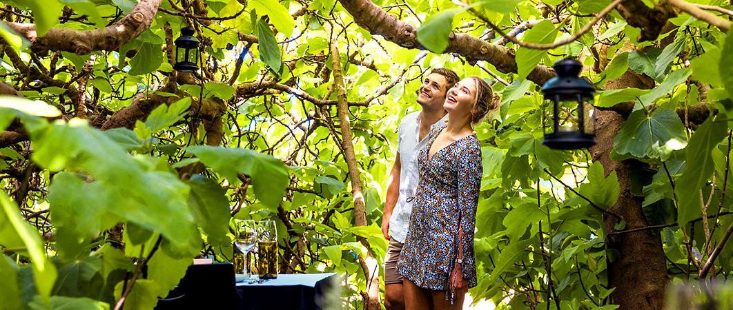 Gastronomo: Wilderness Dining South Australia. The Enchanted Fig Tree, Kangaroo Island
