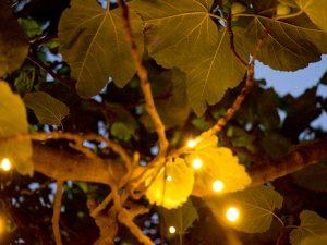 Gastronomo Wilderness Dining at The Enchanted Fig Tree, Kangaroo Island